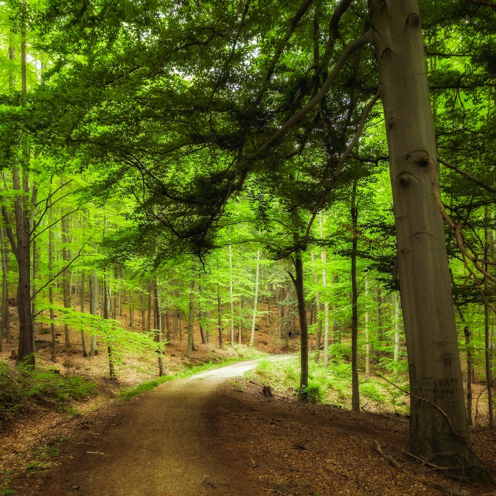 forest springtime winding road