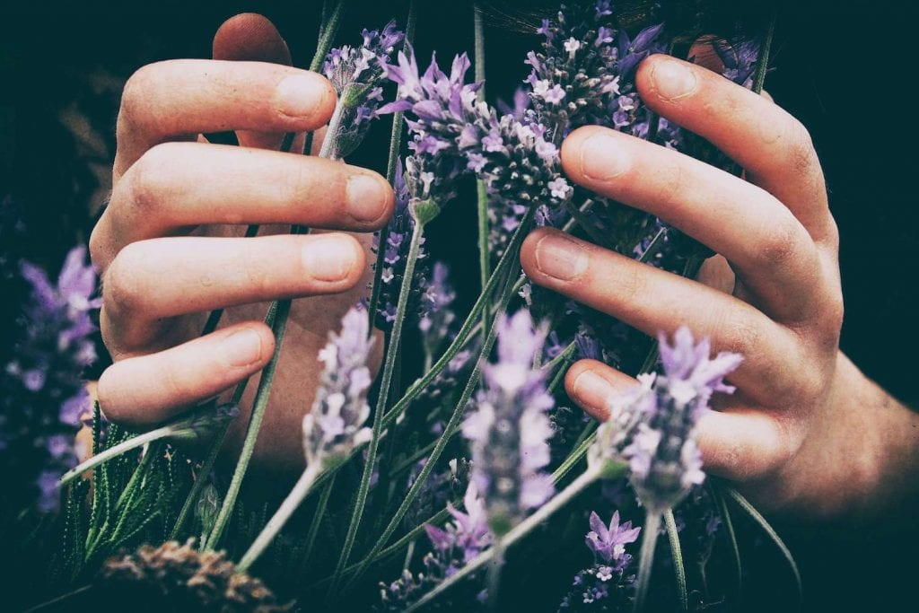 lavender for clean skincare and destressing