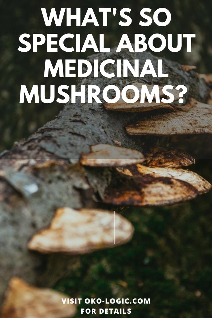 Reishi, Chaga, and Turkey Tail Mushroom Benefits for Vibrant Health