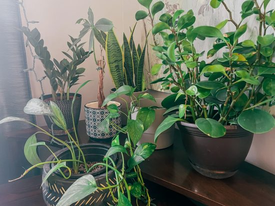plants to purify indoor air